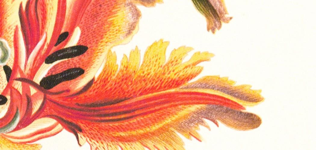 Flora-Illustrata-banner-1440x500