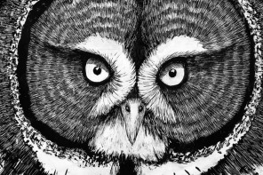 Six Surprising Owl Facts