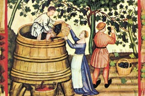 Behind the Book – A Natural History of Wine