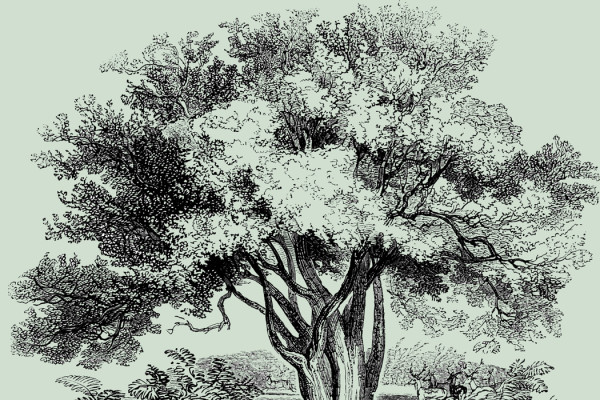 tree-illustration-with-green