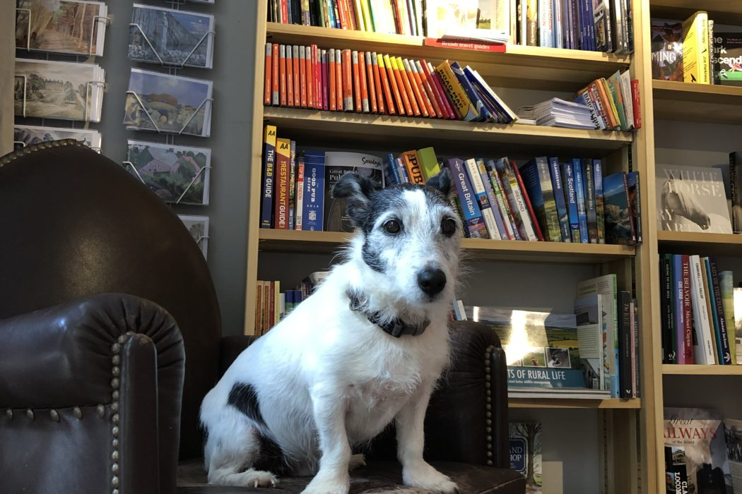 Brock, the Jack Russell terrier, sits on a chair in The Borzoi Bookshop