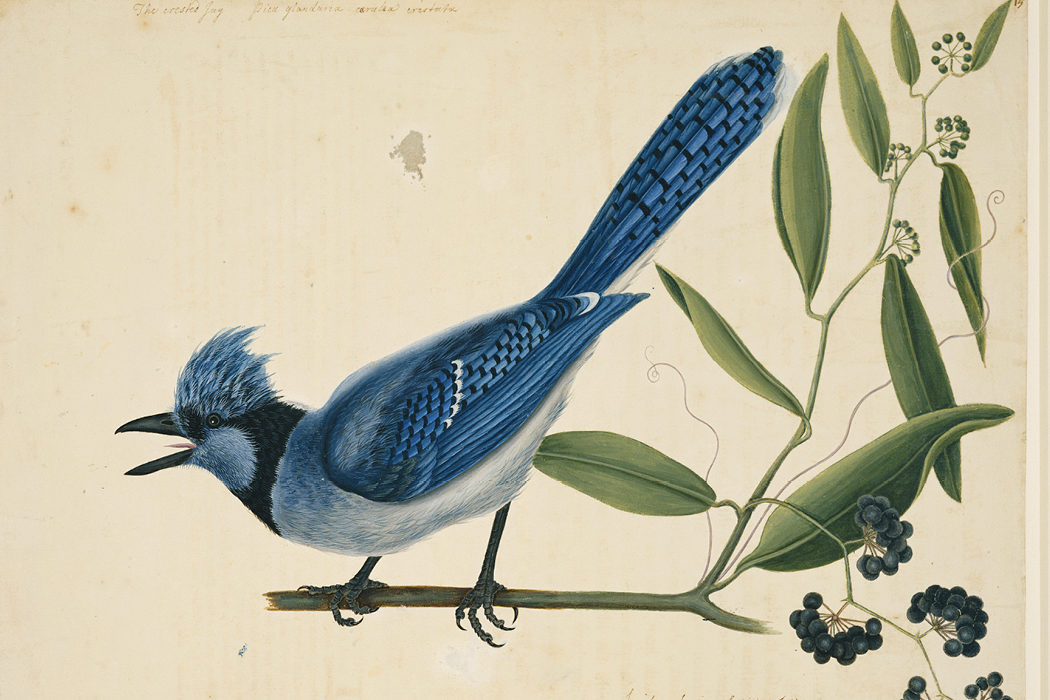 PIONEER OF NATURAL HISTORY ILLUSTRATION: THE ART AND SCIENCE OF MARK CATESBY